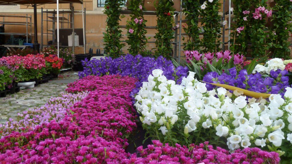 balconi-fioriti-maggio-2018