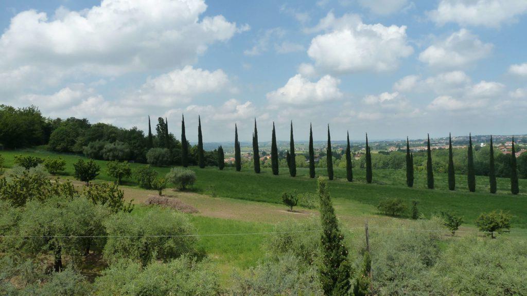 Santarcangelo-di-Romagna-viale-di-cipressi