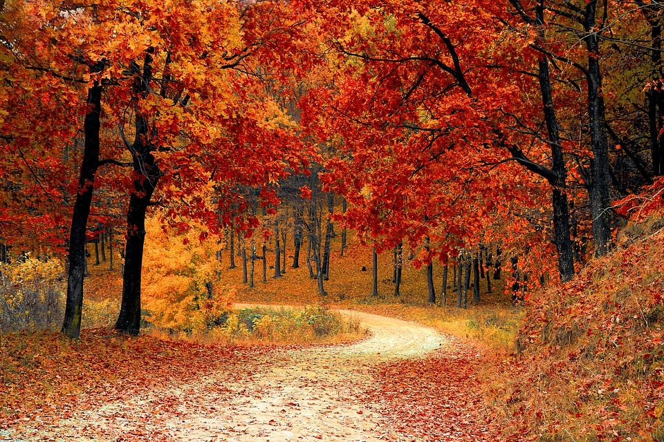 autunno-fogliage-al-parco
