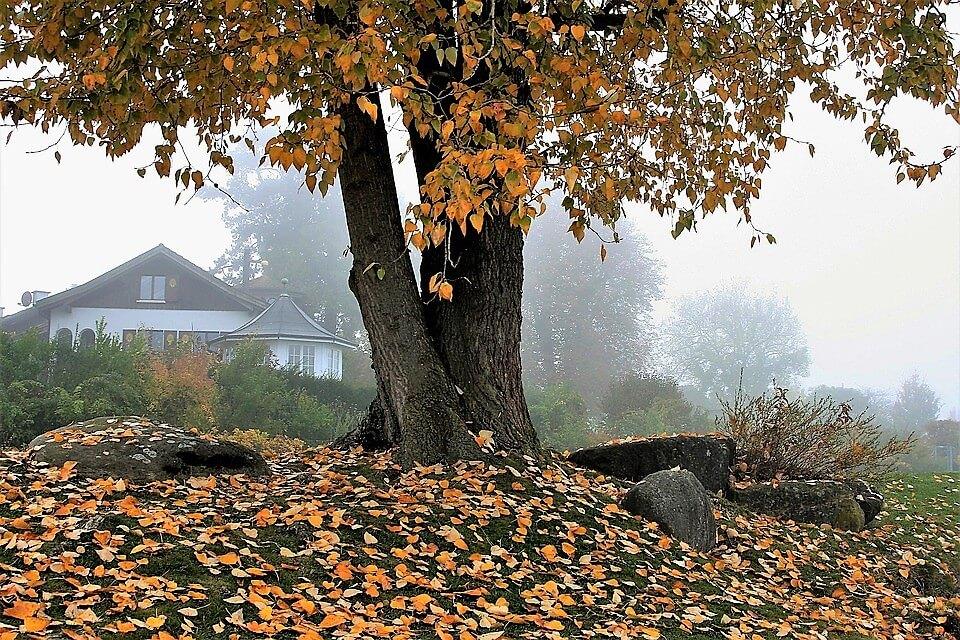 amare-autunno